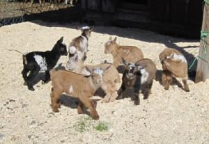 Kids at Rosasharn Farm