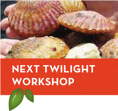 Twilight workshop