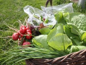 Heart Beets Farm Basket