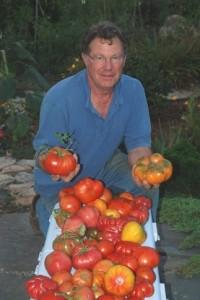 Bob Feingold 24k Heirloom Tomatoes