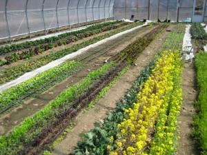 Skinny Dip Farm Greenhouse