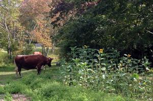 Alderbrook Farm