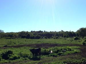 Pine Hill Dairy