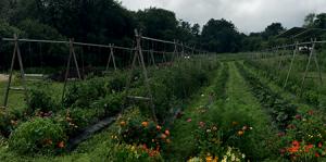 Colchester Farm