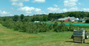 The Big Apple Orchard