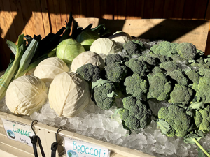 Broccoli at Langwater Farm